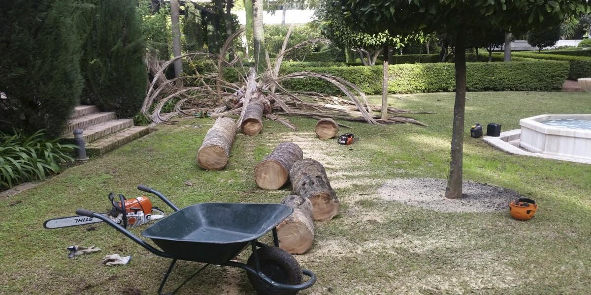 tala de palmeras y árboles foto 02